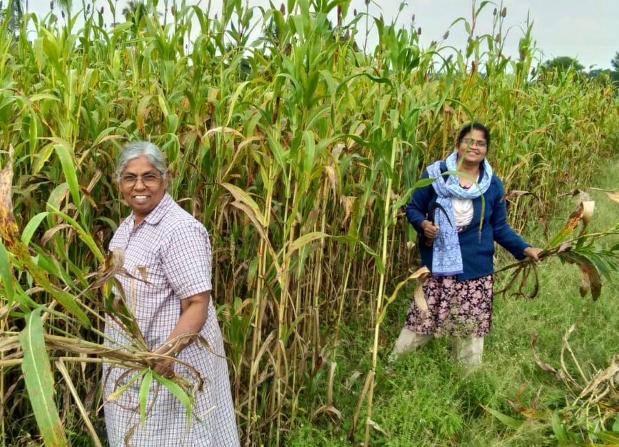 L'agriculture : ressource de vie et de partage
