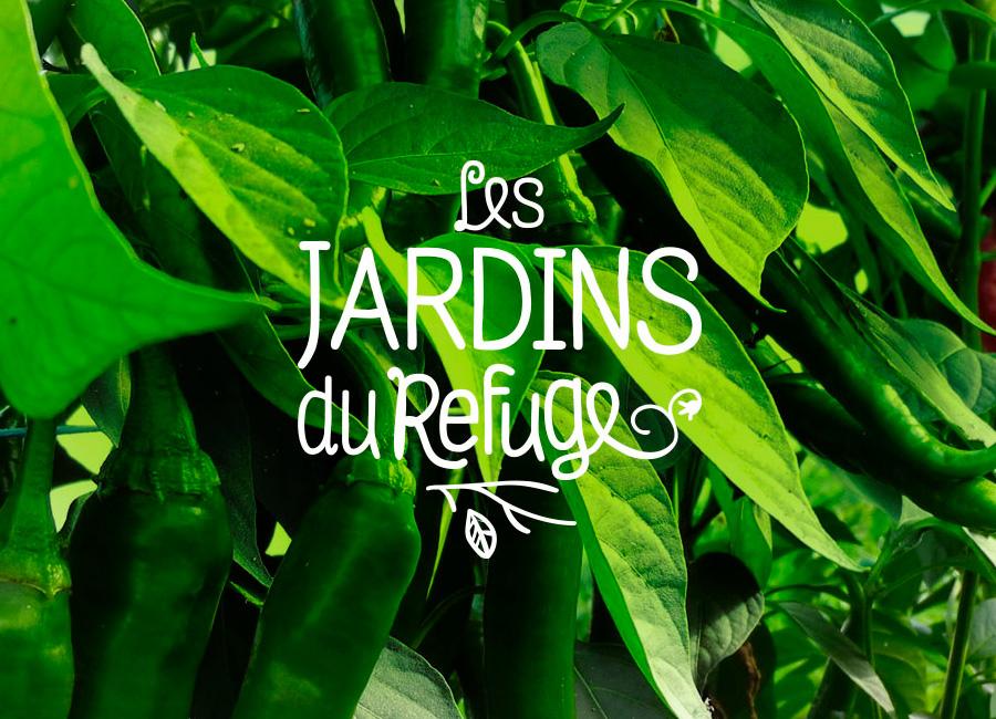 La récolte du piment doux aux Jardins du Refuge